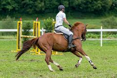 A9907549_s (AndiP66) Tags: stephanhellmüller oberkirch luzern nevada springkonkurrenz seon rvhallwil 11august2019 egliswil august 2019 pferdesporttage springen pferd horse schweiz switzerland kantonaargau cantonaargau concours wettbewerb horsejumping equestrian sports springreiten pferdespringen pferdesport sport sony alpha sonyalpha 99markii 99ii 99m2 a99ii ilca99m2 slta99ii sony70400mm f456 sony70400mmf456gssmii sal70400g2 amount andreaspeters