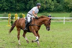 A9907608_s (AndiP66) Tags: stephanhellmüller oberkirch luzern nevada springkonkurrenz seon rvhallwil 11august2019 egliswil august 2019 pferdesporttage springen pferd horse schweiz switzerland kantonaargau cantonaargau concours wettbewerb horsejumping equestrian sports springreiten pferdespringen pferdesport sport sony alpha sonyalpha 99markii 99ii 99m2 a99ii ilca99m2 slta99ii sony70400mm f456 sony70400mmf456gssmii sal70400g2 amount andreaspeters