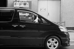 August 5, 2019_5 (Satoshi Kondo) Tags: bw bnw blackandwhite blackandwhitephotography blackandwhitephoto bnwphoto bwphoto bnwphotography bwphotography blackandwhitepoto blackandwhitepotography monochrome leica leicam3 leicaphoto leicaworld elmar90mm filmphotography filmphoto filmcamera film filmpoto filmpotography flimphotography kodak 400tx