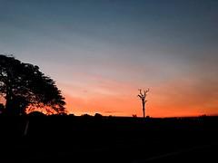 Fire sunset (v.bastos22) Tags: sunlight sky clouds tree sun orange day sunset iphone laranja dia pordosol sol