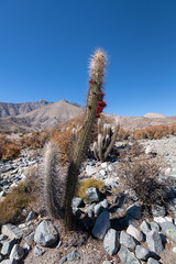 Cactus (MrBlackSun) Tags: eclipse solar solareclipse total totalsolareclipse tse tse2019 chile vicuna d445 landscape eclipselandscape nikond850