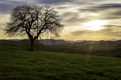 The Tree (doraartem) Tags: tuscany italy sunset landscape nature valdorcia