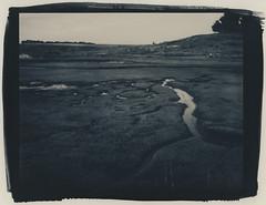 marshlands (lawatt) Tags: marsh estuary drakes estero dboc pointreyes altprocess cyanotype wares hahnemuhleplatinumrag toned