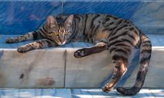 Cool Stones (westrail) Tags: fuji fujifinepixs3pro sigma sigmaart sigmaart5014 pablo pablopicasso fotograf fotographer andreasberdan dslr katze cat kitten tier animal