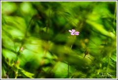 190531_0284_Kaltern.jpg (juergenfrother) Tags: blume blüte blossom rastenbachklamm südtirol kaltern grün green nopeople drausen outdoor tiefinderklamm lessdaylight weniglicht nikond7500
