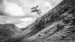 Bollihope . (wayman2011) Tags: colinhart fujifilmxf35mmf2 fujifilmxt1 lightroom5 wayman2011 bwlandscapes mono rural trees quarrys pennines dales weardale bollihope countydurham uk