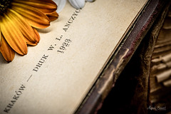 Macro Mondays - Printed Word (Magda Banach) Tags: nikond850 printedword słowodrukowane colors damaged flower macro old oldbook orange worn macromonday