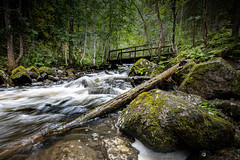 """Slippery bridge • <a style=""""font-size:0.8em;"""" href=""""http://www.flickr.com/photos/126602711@N06/48512552936/"""" target=""""_blank"""">View on Flickr</a>"""