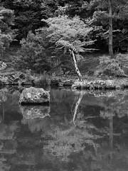 Zen Garden Tree, Reflecting (Nick Condon) Tags: blackandwhite garden japan kyoto lake landscape olympus45mm olympusem10 reflection rock temple tree zen