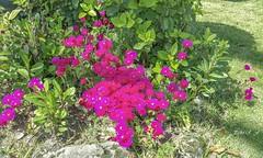 Tarde en el parque (pedroramfra91) Tags: jardín garden flores flowers exteriores outdoors
