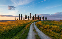 Ready for Harvest (zman2711) Tags: tuscany valdorcia farmhouse crops agriculture sunset road landscape cypress nopeople italy