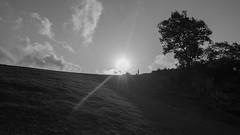 I'm a shadow in the light (anlgngr7) Tags: canon eos 77d is usm nano lens shadow shadows tree trees sun bw blackwhite cloud clouds sky siyah beyaz siyahbeyaz güneş gölge siluet silhouette 18135mm