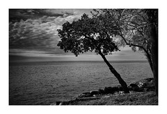 ...expand the dimensions... (VanveenJF) Tags: ontario bw bnwlandscape landscape voigtlander heliar lll wideangle canada kanada lake trees water scerenery clouds summer winter seasons climate change bullocks