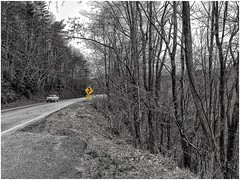Georgia Hwy. 17 Unicoi Turnpike | Between Helen & Hiawassee | January, 2017 (steveartist) Tags: woods forests mountain mountainpass georgiahwy17 northerngeorgia road highway trafficsigns roadsigns pickuptruck iphonese snapseed photostevefrenkel 2017 ruralareas monochromaticimages spotofcolor blackwhite
