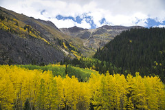 Dreaming of Mountains Again (Bernie Emmons) Tags: colorado sneffels sneffelsrange uncompahgrenationalforest aspentrees mountains a6000 cloudy sony fall green gold sanjuannationalforest