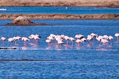 mass introspection (Rajiv Lather) Tags: vögel vogelstand birds birding birder birdwatching india indian water outside nature wildlife introspection sleeping