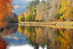 Photo of Autumn Colours on the river Tay