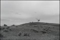 SKfilm2 (DustinGinetz.Photography) Tags: fujineopanacros100 35mmfilm bw saskatchewan canoneos1v labbox d76