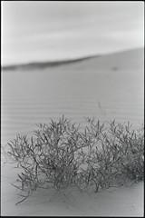 SKfilm (DustinGinetz.Photography) Tags: fujineopanacros100 35mmfilm bw saskatchewan canoneos1v labbox d76