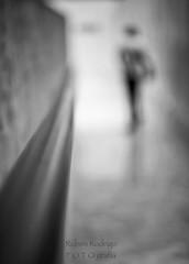 Drift (Mister Blur) Tags: drift thedevlins perspective pointofview pov depthoffield dof profundidaddecampo bokeh desenfoque blur blurry background silhouette blancoynegro blackandwhite noireetblanc palaciodelamúsica music palace mérida yucatán méxico handrail corridor hallway snapseed nikon d7100 35mm nikkor lens f18 rubén rodrigo fotografía happy monochrome monday
