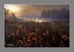 On A Wet, Misty Morning (windshadow2) Tags: sunrise xt1 fuji water light rays fog mist landscape lake pond