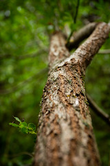 IMG_4582 (Andrew Besenski) Tags: canon 6d nature tree ef1740mm