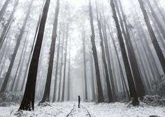Blackspur, Victoria (alexwise) Tags: blackspur victoria alexwise snow fog winter cold selfportrait