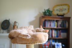 Sundance (S&L Smith) Tags: alabama sundance cat nikonz6 nikon z6 nikon3570f28