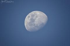 Wanderer of the sky (Gabriel Paladino Photography) Tags: moon luna zoom telezoom telephoto sky cielo gibosa iluminante gibbous atardecer canon gabrielpaladino eos 9000d sigma 150600 77d 840mm