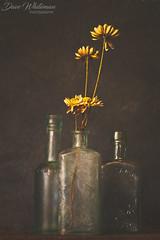 Still Life (Dave Whiteman - AU) Tags: stilllife lensbabyvelvet56 flowers flower things studio lightbox floral bottles