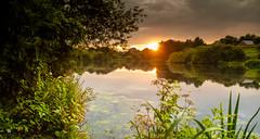 Daisy Nook (sean4646) Tags: d500 nikon nature wildlife daisynook tameside pond crime lake