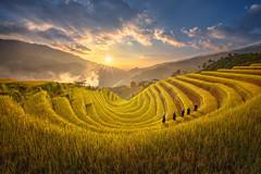 Bình Minh trên ruộng bậc thang ở Mù Cang Chải (quynhchi19102016) Tags: ve may bay gia re di ha noi