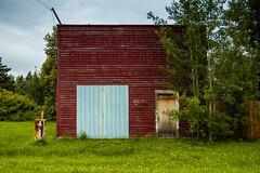 Pickardville Business Opportunity (Bracus Triticum) Tags: pickardville business opportunity アルバータ州 alberta canada カナダ 8月 八月 葉月 hachigatsu hazuki leafmonth 2019 reiwa summer august