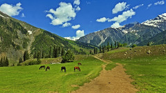 Liberty is always a little away from the sketched road.... (Lopamudra !) Tags: lopamudra lopamudrabarman landscape lopa kashmir kasmir himalaya himalayas india jk horse clouds cloud sky skyscape meadow animal field mountain mountains green verdant liberty freedom people civilisation civilization human humanity life philosophy tree trees beauty beautiful picturesque