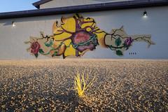 Grant Park (GC_Dean) Tags: phoenix arizona mural corazón building gravel plastic street emptiness mundane city cityscape urban urbanlandscape sociallandscape space colors color colours structure shadows flora