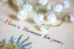 Here's flowers for you; (JMS2) Tags: text printedword macromondays macro book flowers words quote