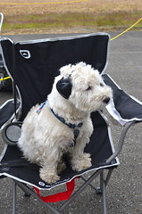 Cute Little Co-Pilot (Neal D) Tags: bc abbotsford abbotsfordinternationalairshow dog animal