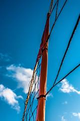 High Level Net (Bracus Triticum) Tags: high level net アルバータ州 alberta canada カナダ 8月 八月 葉月 hachigatsu hazuki leafmonth 2019 reiwa summer august