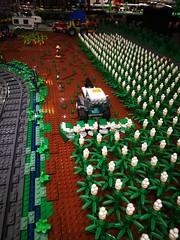 Popcorn crop being harvested.