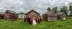 Country Nuptials- Cassidy and Chris, Didsbury Area, Alberta (Christy Turner Photography) Tags: weddings wedding calgaryweddingphotographer barns rustic tamroncanada tamron2470 nikond810