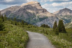 Good planets are hard to find (Tracey Rennie) Tags: path mountains hike alberta wildflowers banffnationalpark sunshinemeadows