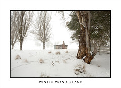 Rural winter scenic landscape near Oberon (sugarbellaleah) Tags: landscape winter countryside gumtrees australia rural farm field shed shack stable trees old rustic wood treetrunk deciduous white snowy snowflakes wonderland hut outback pertty beautiful amazing awe soft scene picturesque
