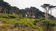 Nature (ColFineArtistMar1) Tags: art nature beauty colors california daytime day fotografia flowers green grass hues image journey life natureart outdoors oceano perspective photograph pacific rock scenery serene sky trees textures tranquility usa vacation view visual amazing