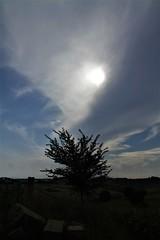 quasi nascosto - Pianello di Ostra (walterino1962 / sempre nomadi) Tags: sole nuvole nubi albero macerie mattoni collina pendii campicoltivatiearati alberi arbusti erba foglie luci ombre riflessi pianellodiostra ancona