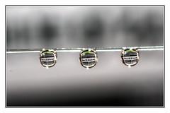 Printed word (Quang thanh Nguyen) Tags: d750 sigma105macro waterdrops macromondays printedword fx