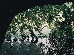 (a.pierre4840) Tags: olympus izm330 38105mm f456 35mmfilm fujifilm fujic200 colourfilm colorfilm tree lake reflection reflections wiltshire england composition