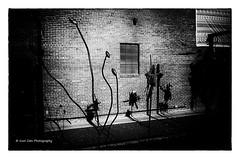 Strange Art (Kool Cats Photography over 12 Million Views) Tags: artistic architecture art abstract abstractart strangeart darkart ricohgrii outdoor wall shadows highcontrastblackandwhite highcontrast blackandwhite bw monochrome