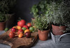 Ingredients (V Photography and Art) Tags: freshherbs tomatoes variety home cooking food summer stilllife ingredients homecooking