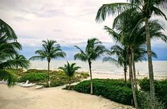 Sanibel Island (Kerri Lee Smith) Tags: vacation sanibel sanibelisland florida beach pixel3a summer island palms palmtrees stormclouds