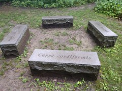 Anglų lietuvių žodynas. Žodis carya reiškia <li>Carya</li> lietuviškai.